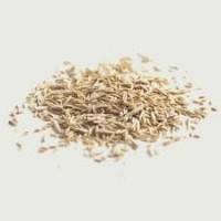 ООО НПП «Зарайские семена» закупает семена райграса однолетнего