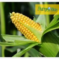 Семена гибридов кукурузы от производителя