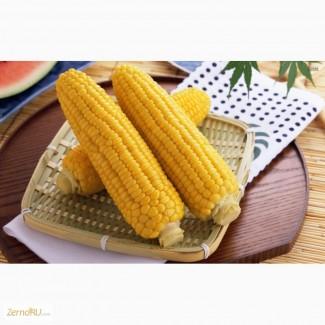 Гибриды семена кукурузы Лимагрейн
