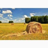 Травосмесь «Южный сенокос»