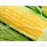 Гибриды семена кукурузы Монсанто