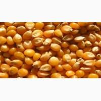 Кукуруза цельная в мешках 30 кг