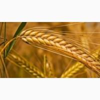 Продам зерно