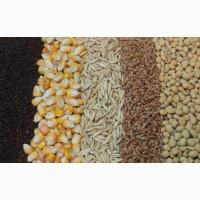 Закупаем пшеницу 3, 4, 5 класса, ячмень фуражный, рож, овес, горох, кукурузу
