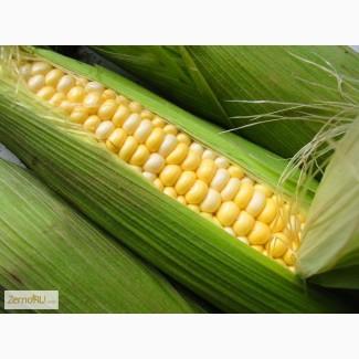 Семена гибриды кукурузы Pioneer ПР39Д81 (ФАО 260), П8400 (ФАО 270), ПР39Г12 (ФАО 200)