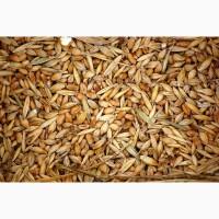 Зерноотходы ячменя населению от производителя