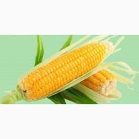 Семена кукурузы на с/х сезон 2020