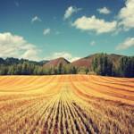 Продаем пшеницу 3, 4, 5 класса