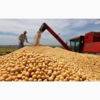 Купим соя бобы протеин 32-40%