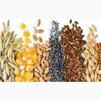 Семена масличных, зерновых, бобовых и кормовых культур