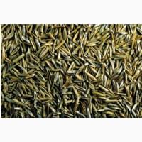 ООО НПП «Зарайские семена» закупаем семена овсяницы красной от 20 тонн