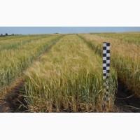 Продажи зерновых, масленичных культур