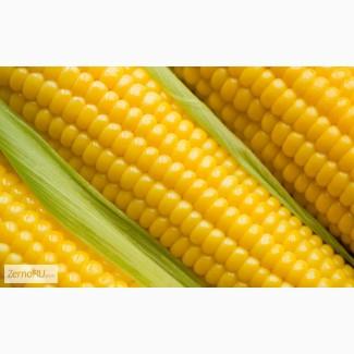 Семена гибриды кукурузы Pioneer ПР37Н01 (ФАО 390), ПР39Ф58 (ФАО 270), ПР39Х32 (ФАО 180)