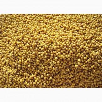 ООО НПП «Зарайские семена» закупает семена горчицы желтой