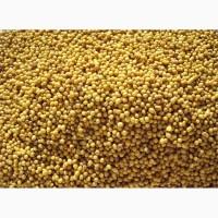 ООО НПП «Зарайские семена» закупает семена горчицы жёлтой