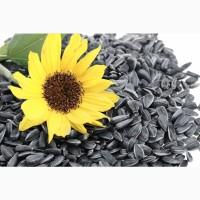 Семена подсолнечника Сингента Сумико под экспресс 100% под урожай