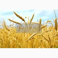По заявке пшеница, ячмень, кукуруза
