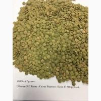 Чечевица (Lentils green disc) Алтайская 2019