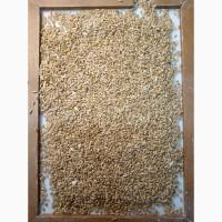 Продаём пшеницу 4 класс