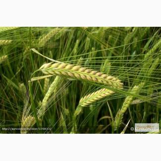 Продам: семена ячменя. Цены и прайсы внутри