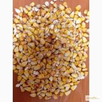 Продам зерно кукурузы фураж