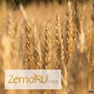 Пшеница 3 класса опт