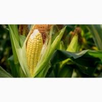 Гибриды семена кукурузы П7709, П8400, ПР37Н01, ПР39Д81, ПР39Ф58, ПР39Х32 (Пионер, Pioneer)