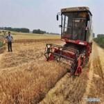Пшеница 4 класса опт