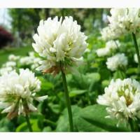 Семена клевера ползучий Белгородский-1 РС1