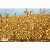 Продам: семена овса. Цены и прайсы внутри