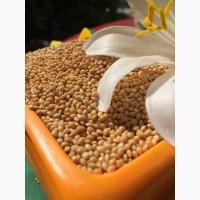 Услуги сушке зерна в Ростовской области