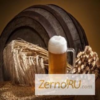 Продаем ячмень пивоваренный