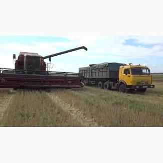 Зерновозы на уборку урожая