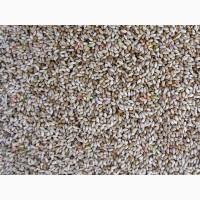 ООО НПП «Зарайские семена» закупаем семена тимофеевки от 40 тонн