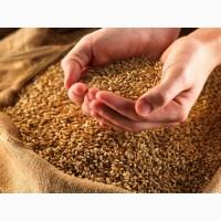 Продам пшеницу на экспорт 2, 3 класс FOB Odessa/ Wheat 2, 3 grade