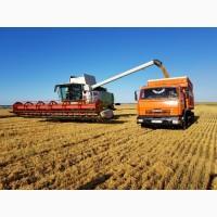 Перевозки сельхозпродукции в период уборки 2019