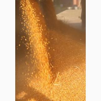 Кукуруза 3 класс ГОСТ 13634-90