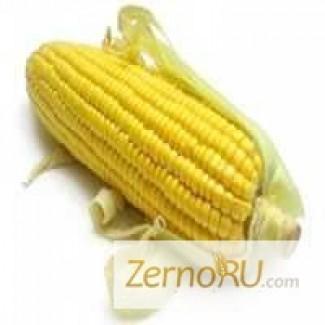 Продаем кукурузу 3, 4 класса