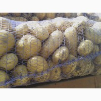 Картофель продовольственный оптом Ред Скарлет Импала Леони урожай 2018