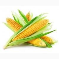Реализуем кукурузу