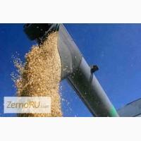 Твердая пшеница FOB Ейск, Россия