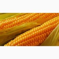 Ячмень кукуруза ФОБ Одесса