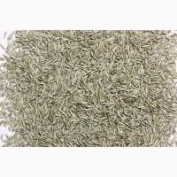 Закупаем семена райграса пастбищного от 40 тонн