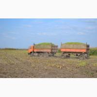 Перевозка урожая с поля камазами