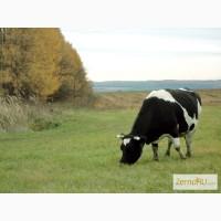 Продам: Семена пастбищных и сенокосных трав