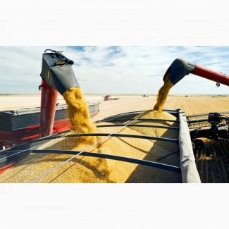 Перевозка сои, кукурузы.Грузоперевозки камазами по России