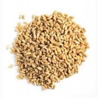 Пшеница продовольственная и фуражная. Экспорт из России во все страны мира