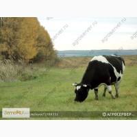 Продам: Пастбищные и сенокосные травосмеси производства РФ