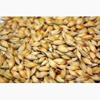 Семена ячменя Таловский 9 ЭС, РС-1 урожая 2017 года от производителя
