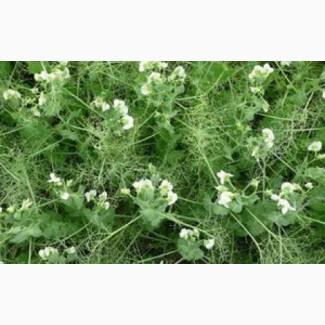 ООО НПП «Зарайские семена» продает оптом семена: горох посевной